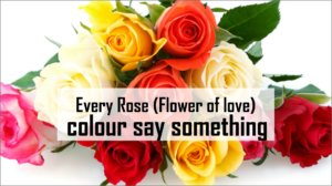 Every Rose (Flower of love) colour say something