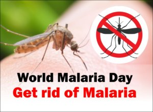 World Malaria Day: Home Remedies to get rid of Malaria