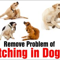 Remove Problem of Itching in Dogs, 3 Best Treatment