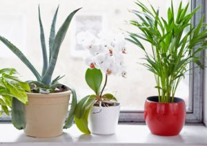 Put these 5 Plants in the House, Take away the Diseases