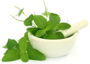 Benefits and side effects of Basil leaf