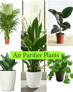 5 Air Purifier Plants that are Best For home and Health